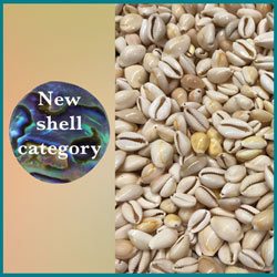 Click here to see our new shell category